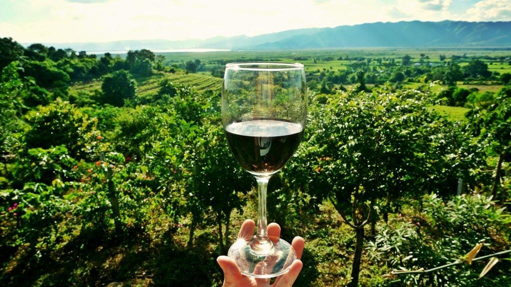 biologgische wijn met uitzicht over het veld