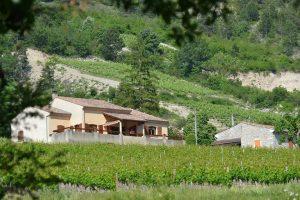 Biologische wijnveld