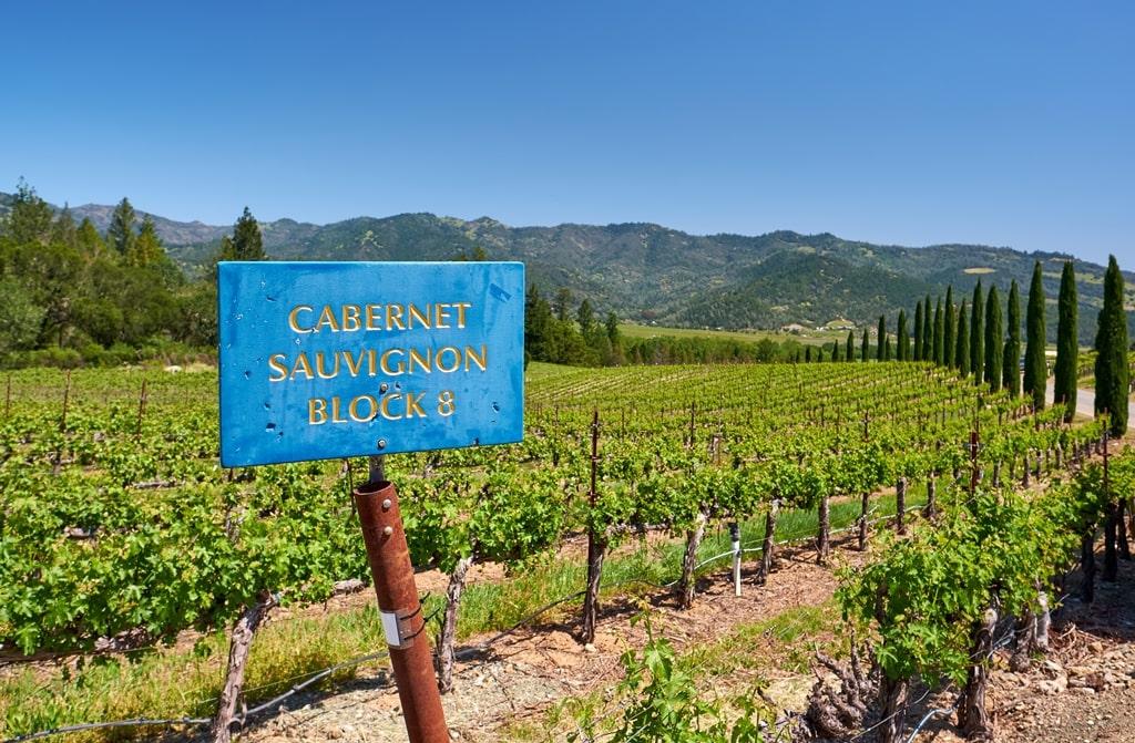 Cabernet sauvignon wijngaarde