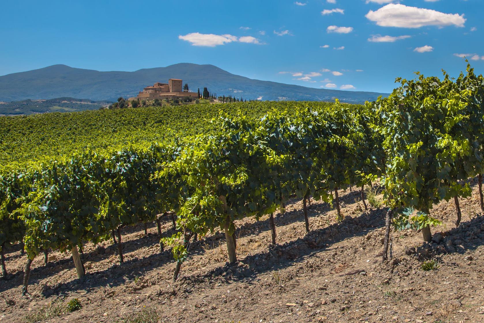 wijngaard Chablis