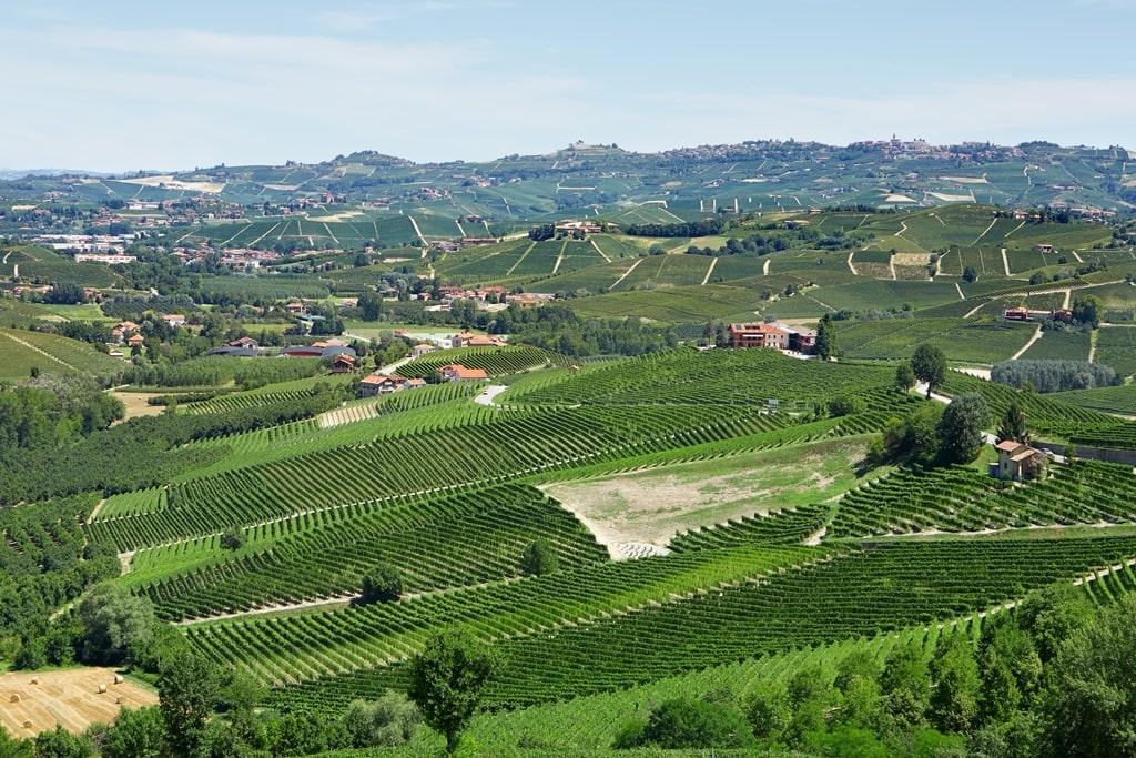 Wijngaarde in Piedmont Italie