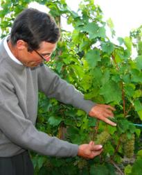 Charles Baur biologische Elzas wijn bij VInopura