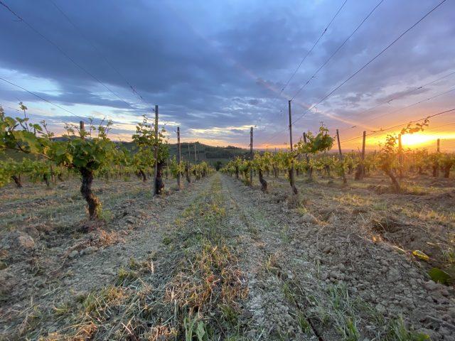 wijngaard van Cordero SanGiorgio wijnen bij VInoPura