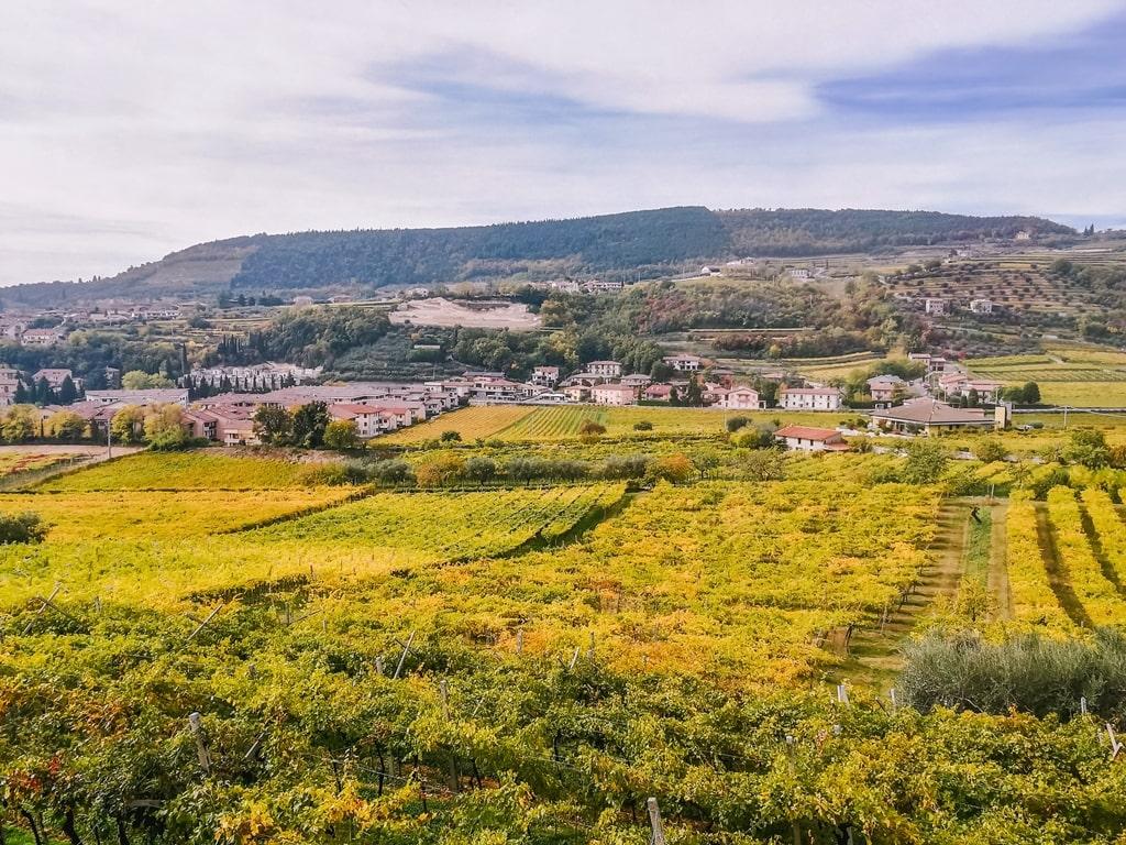 Ripasso Valpolicella wijngaarde