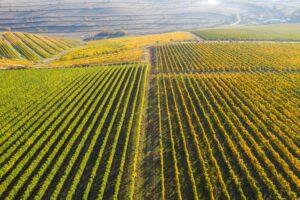 Roemeense wijnbouw