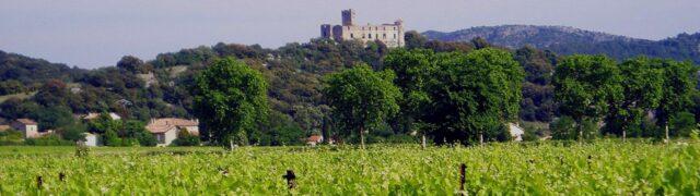 De wijngaarden van Vignerons de Tornac